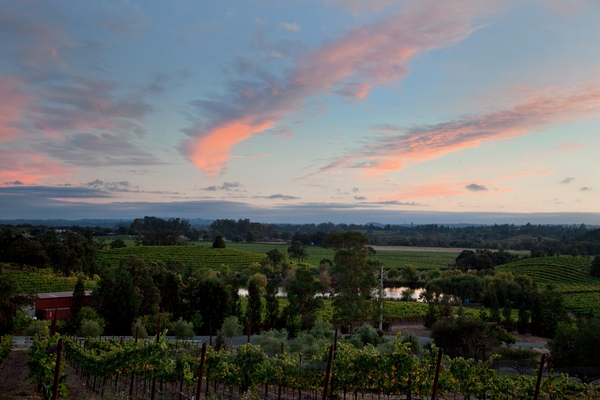 Napa Valley Wedding View